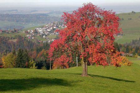 Aussicht auf das Dorf Schwarzenberg